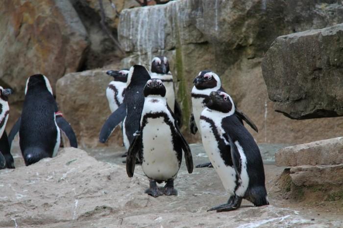 Пингвины в Берлине