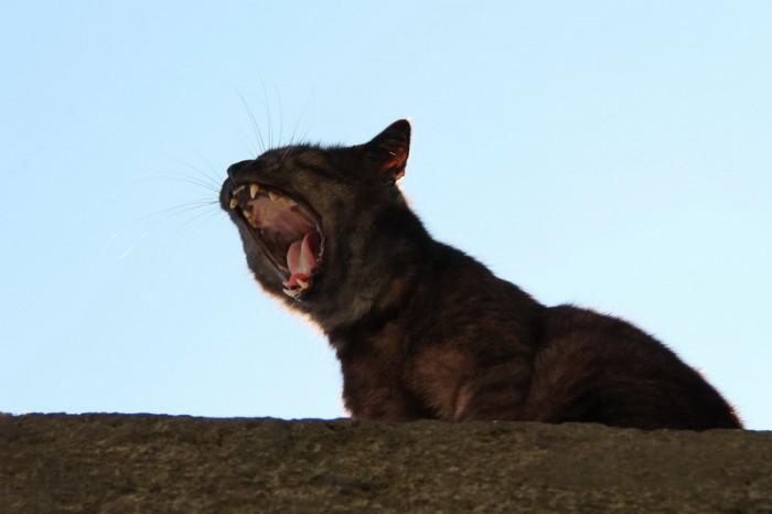 кошка в Неаполе